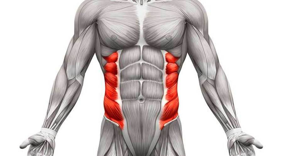Abs Exercises Anatomy External oblique muscle