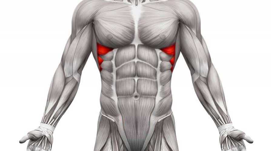 Abs Exercises Anatomy Serratus anterior muscle